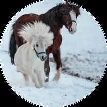 Dietmar Theile Fotografie, Räume für Träume, Pferdefotografie, Pferde, Pony, Ponys,