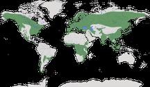 Verbreitung der Gattung Strix