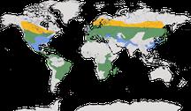 Verbreitung der Gattung der Ohreulen (Asio)