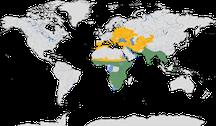 Verbreitung der Gattung der Racken (Coracias)