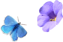 Insekten werden durch Duft und Farben angelockt.