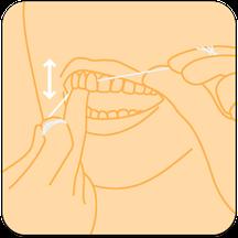 Zahnseide sanft zwischen die Zähne einführen und auf und ab bewegen. (© proDente e.V.)