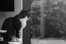 Katze die aus dem Fenster schaut.