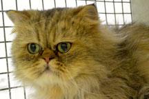 """Garfield. D'un nom de famille signifiant """"champ (domaine) en triangle"""" en Vieil anglais. Prénom masculin anglais. Chat fictif issu du comic strip homonyme Garfield créé par Jim Davis. Première publication : 19 juin 1978."""