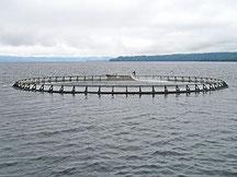 マッコーリー湾のサーモン用イケス