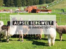 Alpsee Bergwelt im Allgäu bei Immenstadt