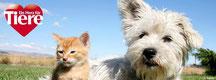 Chi-Love.de | BLOG | Magazin  | Chihuahua | Ein Herz für Tiere
