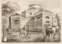 Rotonde de la girafe et des éléphants.