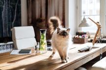 Positive Gefühle für Versicherung und Geldanlage, gute Beratung, wohl fühlen, süße flauschige Katze