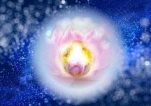 ダライ・ラマ-トンレンの瞑想【自己変容の道】