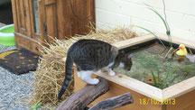 Eine Katze steht höchst interessiert am Rand des Brunnens im Freigehege, daneben ein Ballen Stroh