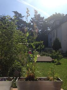 Yoga im Garten bei Jette