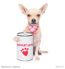 Spenden für die Hunde in Rumänien