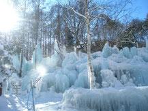 写真が撮りたくなる氷点下の森