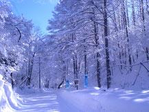 氷点下の森までの道のり
