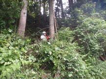 森林、枝打ち