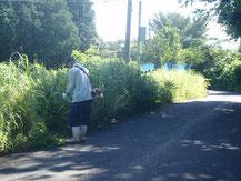 道路草刈り