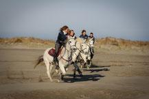 Trois  heures de randonnée à cheval en petit groupe organisée par Abrivado Ranch en Camargue pour cavaliers confirmés
