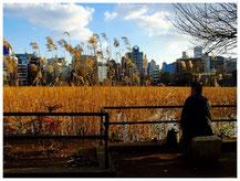 東京写真秋風の街