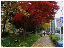 東京写真 街角スナップ 静かなる調べ