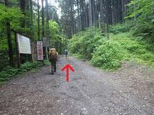 登山口に向かう林道②