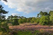 Bos- en heidengebied Exloo