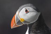 Varanger, Reiseinformationen für Fotografen und Ornithologen
