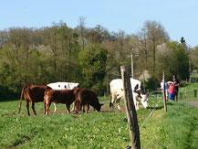 J'observe le troupeau dans l'étable ou dans la prairie