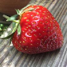 Erdbeeren ©www.balanceYou.ch