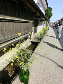 道沿いに、飾ってある菜の花。酒瓶が花瓶とは♪