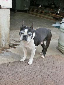 こんなカワイイ奴と出会ったよ。招き犬だ~(#^.^#)