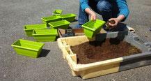 préparation de potées de fleurs d'été à la Pointe du Guern
