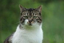 Katzen / Kitten