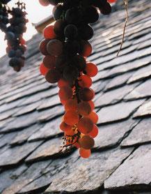 Le vin de Collonges-la-Rouge était réputé dans toute la Vallée de la Dordogne, en Auvergne, dans Le Limousin, et à la cour de Louis XIV