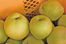 その甘みに特徴を持つ「八達」梨。程よく熟した果肉には、滑らかな食感と独特の甘さがある。食べどきは全体が黄色くなった頃。