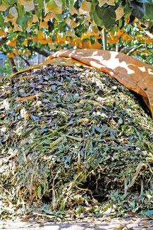 高く積まれた枝葉も発酵すると体積が小さくなっていく。作っては撒き、作っては撒きの秋。