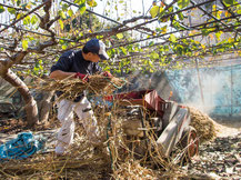 """11月上旬。収穫が終わって「お礼肥え」のための堆肥作りをする成夫さん。梨農家には収穫期以外にも1年中やるべきことがあり、まさにその""""結果""""として梨が食べられるのだと知った。"""