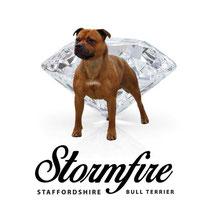 Stormfire kennel logo