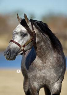 2022: Tragend von/In foal to: Dun It For Whizkey