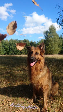 Hund mit Herbstlaub