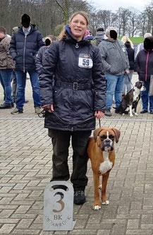 Boxer Zucht NRW Ausstellung