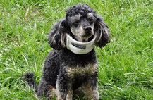 Arthrose, Spondylose Hundephysiotherapie Heike Amthor Leipzig Stötteritz