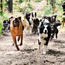 Gassiservice, Hauptstadthunde, Hundeausführservice