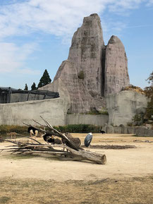Balade contée au zoo de Vincennes