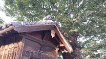戸谷八稲荷の画像