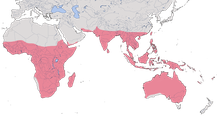 Karte zur Verbreitung der Prachtfinken