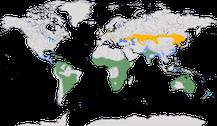 Karte zur Verbreitung der Gattung Löffler