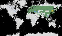 Verbreitung der Gattung der Buntspechte