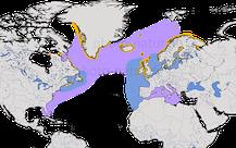 Verbreitung der Gattung der Alca