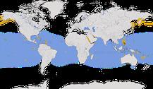 Karte zur Verbreitung der Gattung Onychoprion